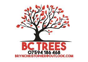 B.C Trees
