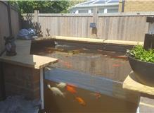 Raised fish pond