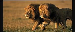 Two Lions 11 Ltd