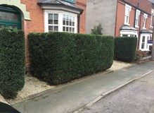 Hedge trim and shape