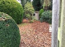 Heavy leaf fall