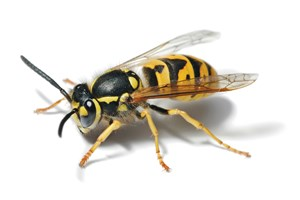 Aktiv Pest