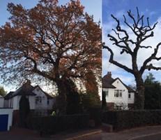 Woodpecker Tree Maintenance