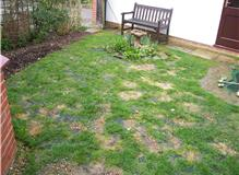 boggy lawn terrace area