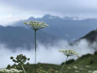 Хмурое утро в горах Красной поляны @dmitry_serdyk