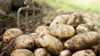 UK sets up potato database as spud prices plunge to three-year low