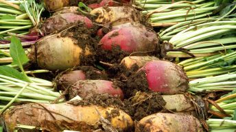 British Sugar and NFU Sugar announce 2019 sugar beet price