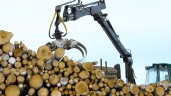 Forestry values surge in 'astonishing' year for the sector