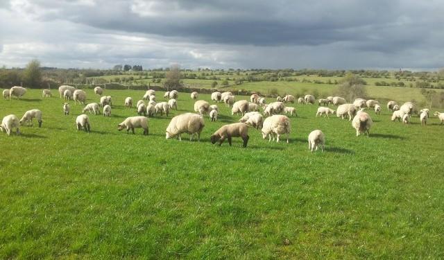 UK beef, sheep marketing spend worth £217m