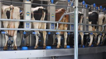 Large scale US dairy farms set to increase milk production