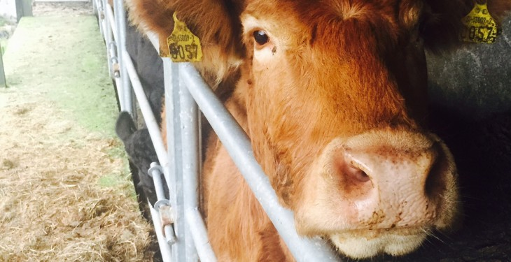 Farm antibiotic sales hit 'all time low' in the UK