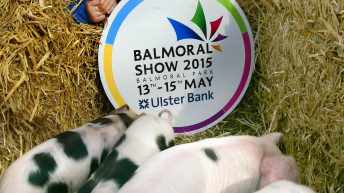 Video: Day 2 at Balmoral Show