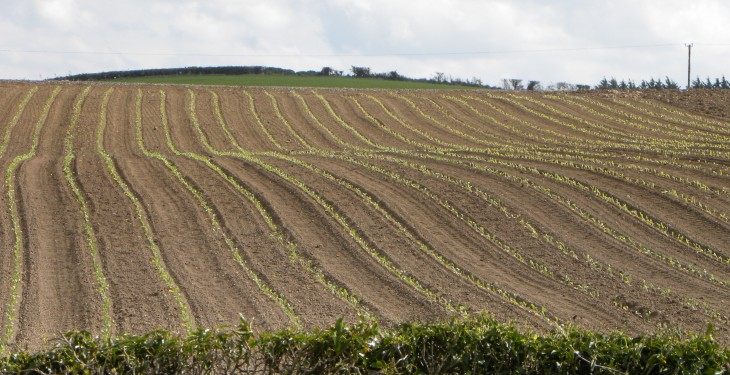 Scotland granted deorgation on 2020 3-crop rule