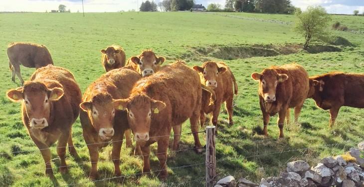 £100,000 allocated for the Social Farming Capital Grant Scheme