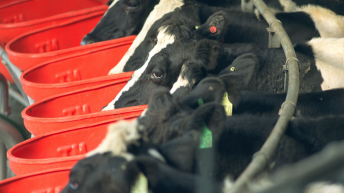 Fonterra slashes milk price (now equivalent to 19c/L)