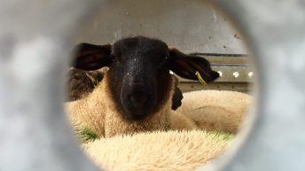 Under review: UK's live export ban comes one step closer