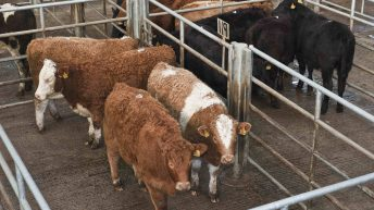 Cardigan mart closure 'another blow' for industry