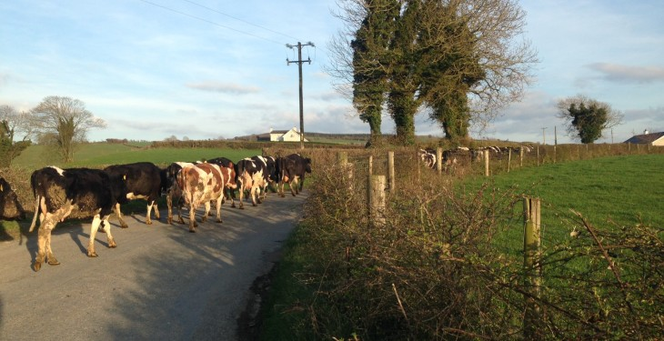 Late spring turnout sees incidents of mastitis cases jump 100%