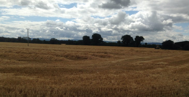 Winter barley production increases on 2014 levels – CSO
