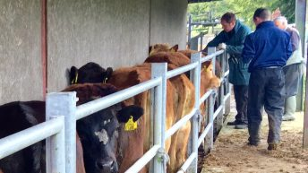 Northern TB rates appear to stabilise