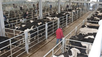 Live export ban a 'non-starter' for NI industry