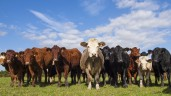 Levy bodies take first step promoting sustainability of UK beef and lamb