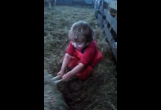 Video: Three-year-old delivers lamb… all by herself!