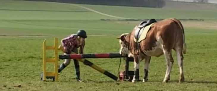 Video: Meet the cow trained to jump like a horse