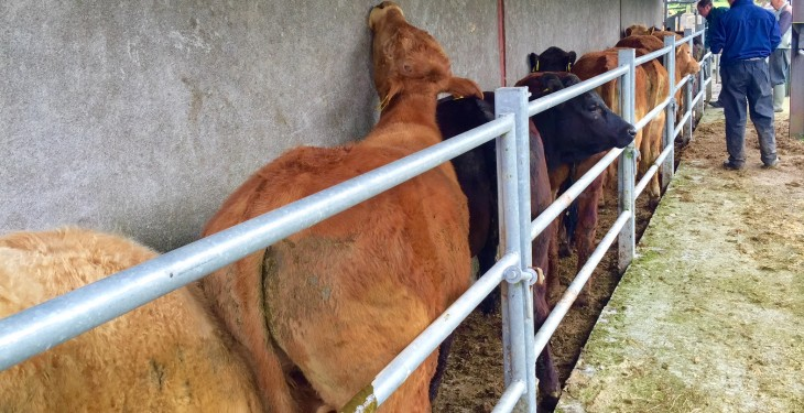 TB levels down on 2014 levels – here's where has the worst herd incidence