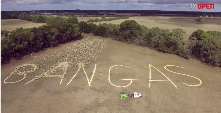 Video: Aussie farmer uses 2,000 sheep to protest against gas mining