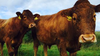 Applications to the North's Environmental Farming Scheme to open soon