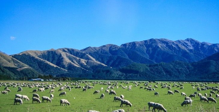 New Zealand farmers export more meat for less money