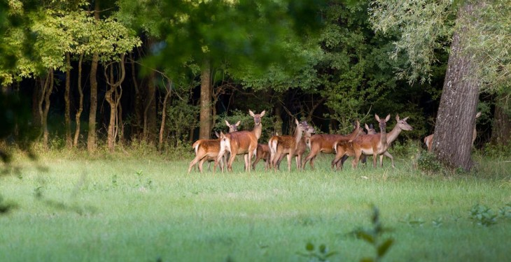 Over 4,600 deer hunting licences issued to date