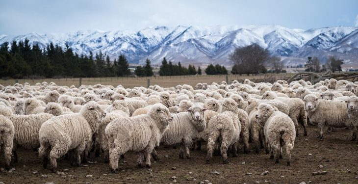 China's No. 1 meat processor to invest €156m in New Zealand's No. 1 livestock company