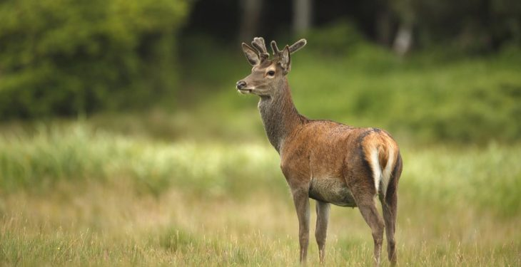 Should farmers be allowed to shoot deer without a licence?