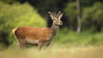 Farmer who shot 3 deer out of season says he was preventing TB being spread