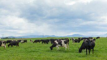 Fonterra Australia cuts milk price for new season due to 'market conditions'