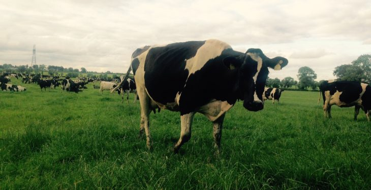 Dutch dairy farmers paid more to produce milk from grazed grass