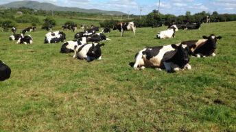 'No sale' on latest skimmed milk powder (SMP) tender