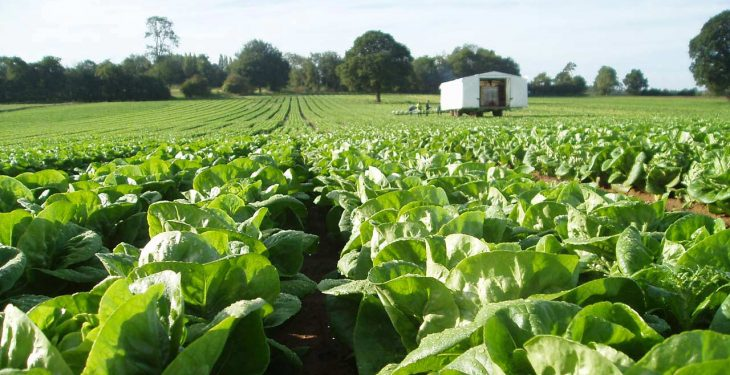 Horticulture levy result 'shows just how divided levy payers have become' – NFU
