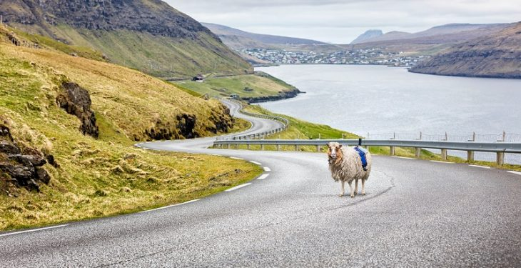Video: Google recruits sheep to map out the Faroe Islands in the North Atlantic