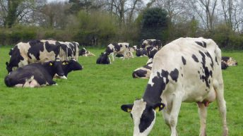 'Modern dairy heat detection systems do work'