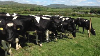 EU milk output on the rise, despite shrinking herd