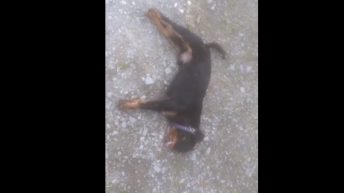 Video: Two dogs have lucky escape after they're overcome by slurry fumes