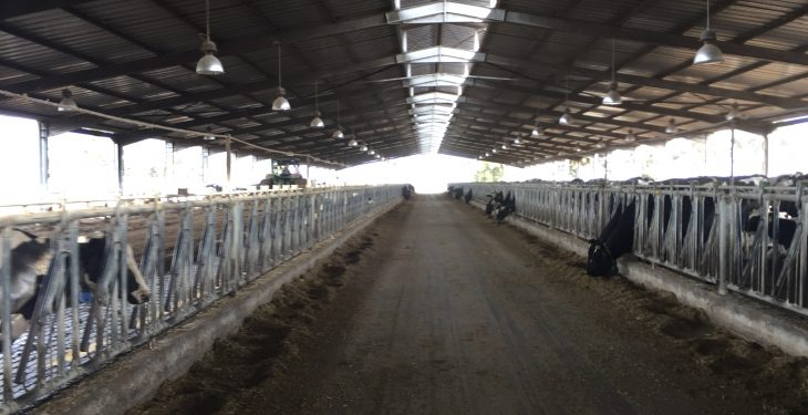 Video: Behind the scenes access to one of Morocco's largest dairy farms