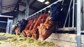 Less frequent TB testing to incentivise strengthened biosecurity