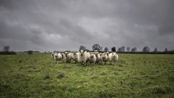 20 sheep reported stolen from a farm in the North