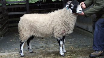 NSA ram sales in East and South West to continue despite Covid constraints