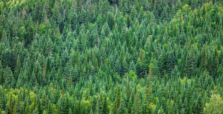 'Forestry returns have the potential to enhance farm financial fitness'