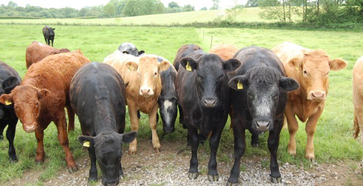 'Beef farmers must become more efficient – there's no other show in town'